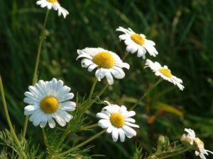 Az allergiás kiütés az arcon és kezelési módjai