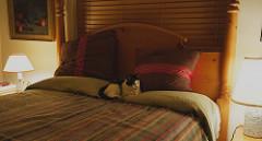 Pamut ágyneműhuzat